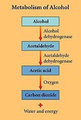 Absorption, Distribution and Metabolism